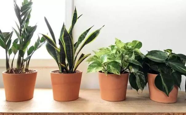 合理的办公室植物风水可以助你财气大开