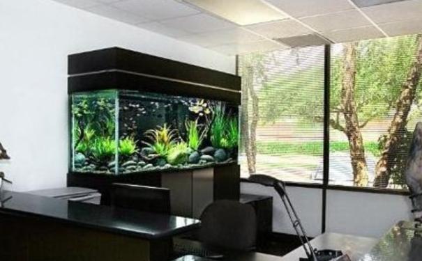 办公室风水的鱼缸摆对了就可以给你招财转运