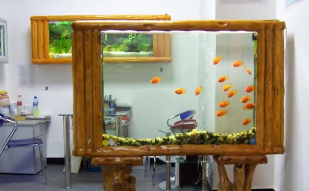 给你的老板献上办公室里的鱼缸养鱼风水