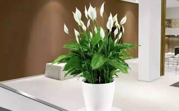 家里的各个地方如何布局植物风水