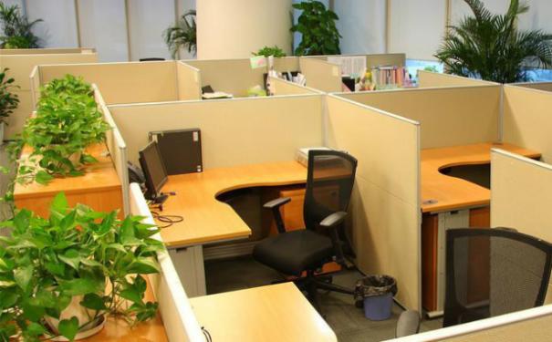 受人喜爱的几种办公室风水植物