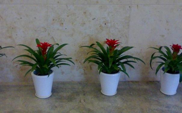 办公室植物布局也有讲究